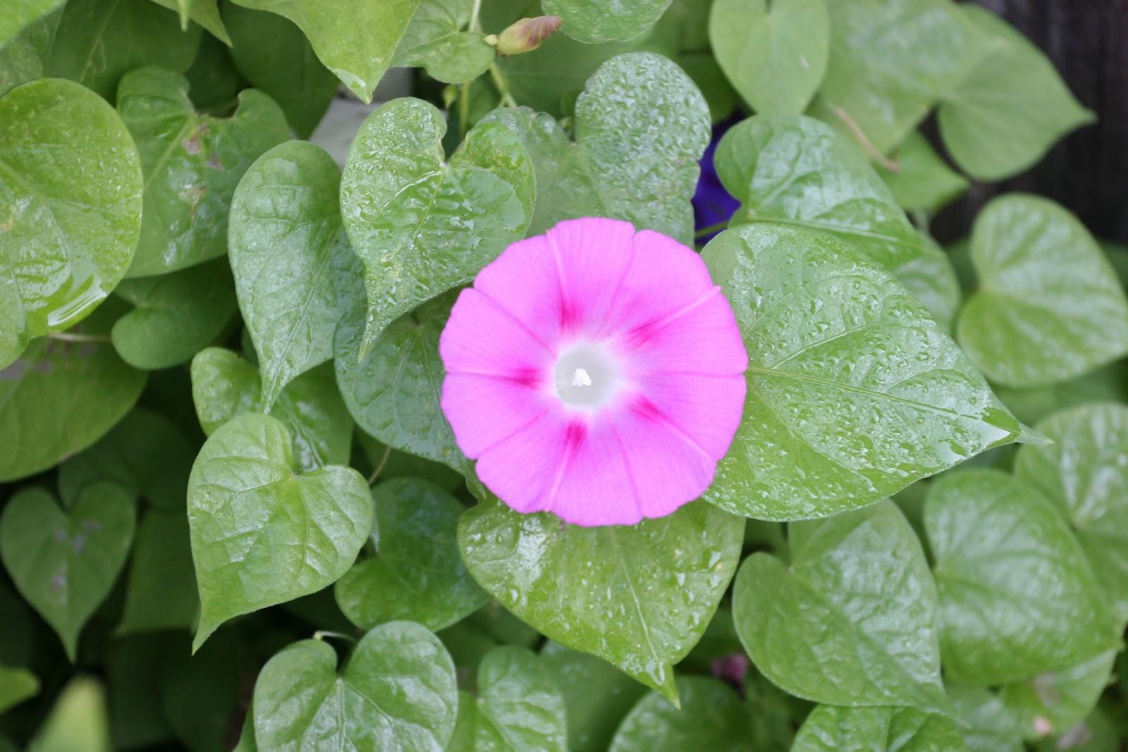 Gardening 2012 - IMG_3125.JPG