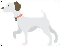 คำศัพท์ภาษาอังกฤษสุนัข