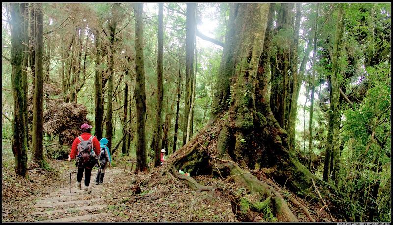 特富野森林