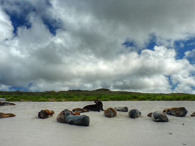 Sea lions on Española Island