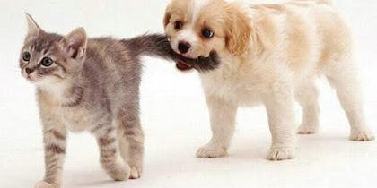 Chích ngừa vacxin chó mèo và những điều cần biết