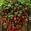 oscar javier salcedo acuña's profile photo