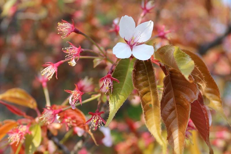 2014 Japan - Dag 10 - marjolein-IMG_1413-0177.JPG