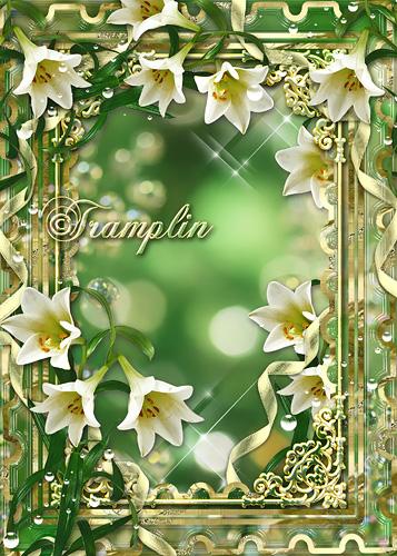 Рамка для фото  -  Символ благородства, символ красоты, уважают лилию всей земли цветы