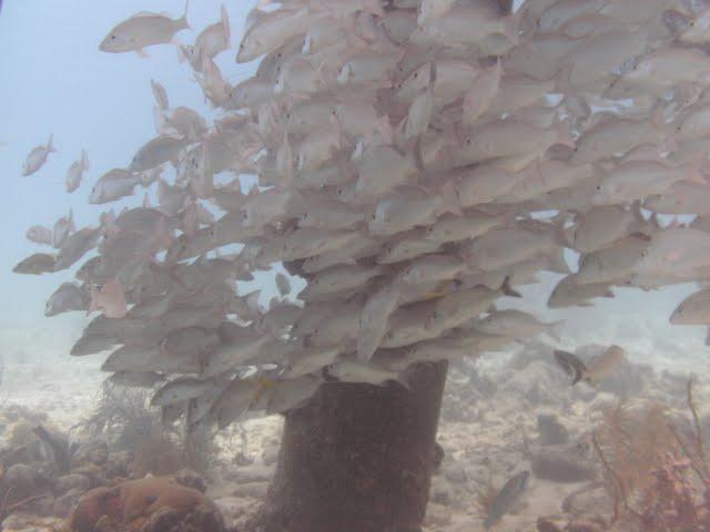 Bonaire 2011 - PICT0014.JPG