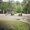 Tierpark Hagenbeck - Kamele