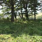 Slave Cemetery Gleaves Farm Cripple Creek, Wythe County, Virginia