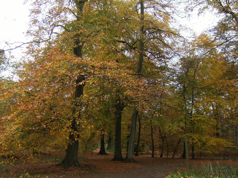 1011040024 Autumn colours in Quarry Wood