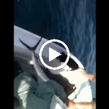 Sailfish to the eye.MOV
