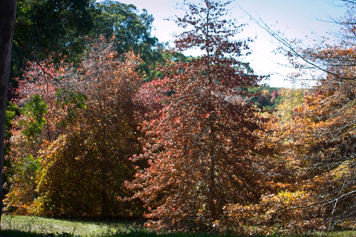 2011 04 25 Mt Lofty Botanic Garden - IMG_6556.jpg