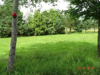 terrain à Pensol (87)
