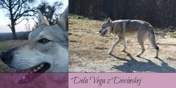 Dela Vega z Devínskej 1.jpg
