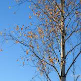 Последняя листва