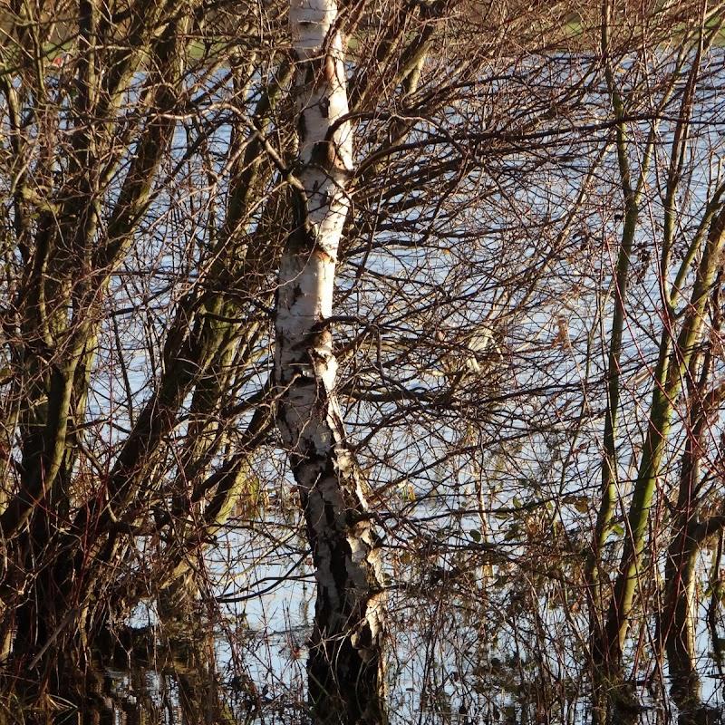 Willen_Lake_30.JPG