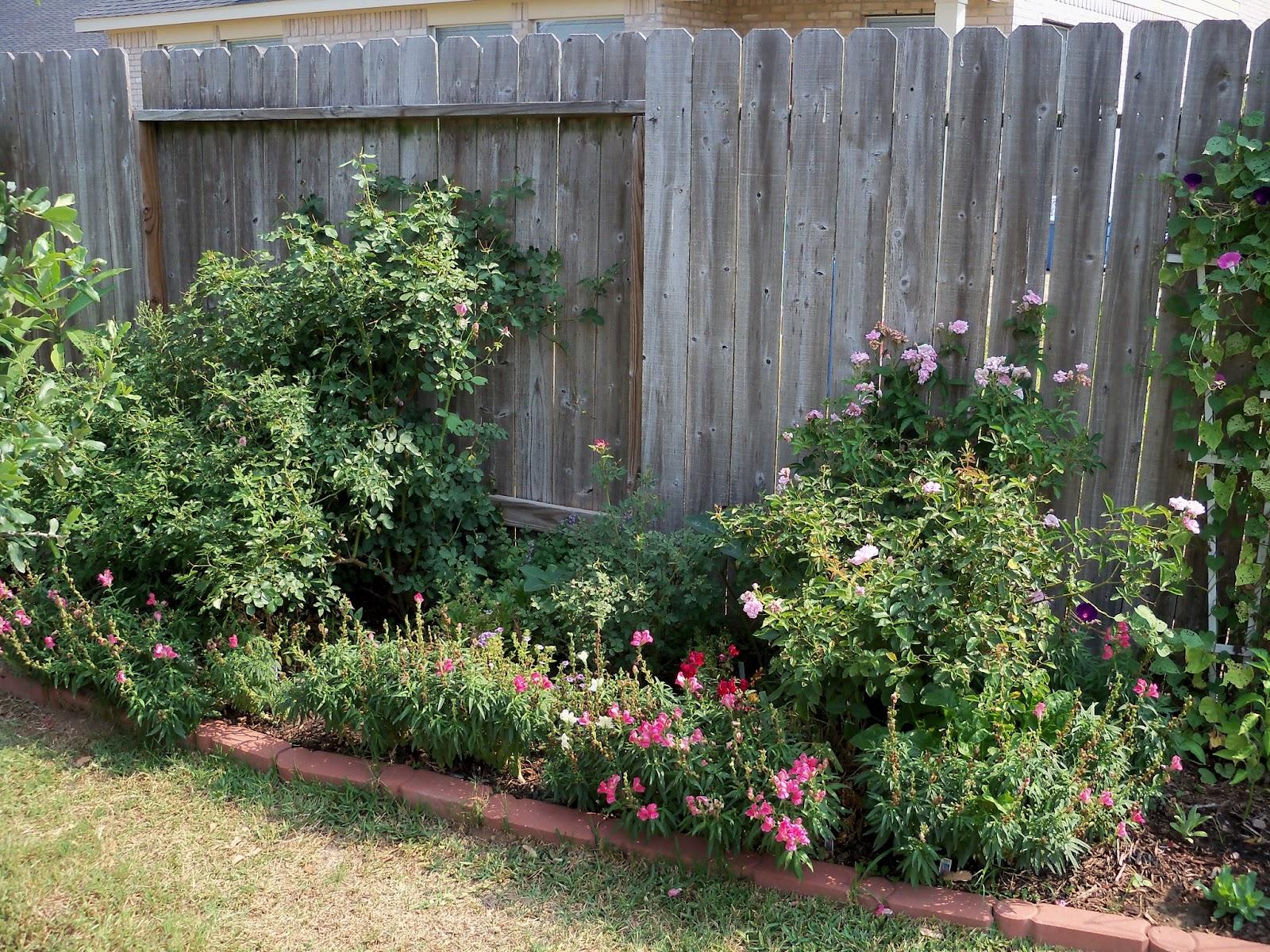 Gardening 2011 - 100_9316.JPG