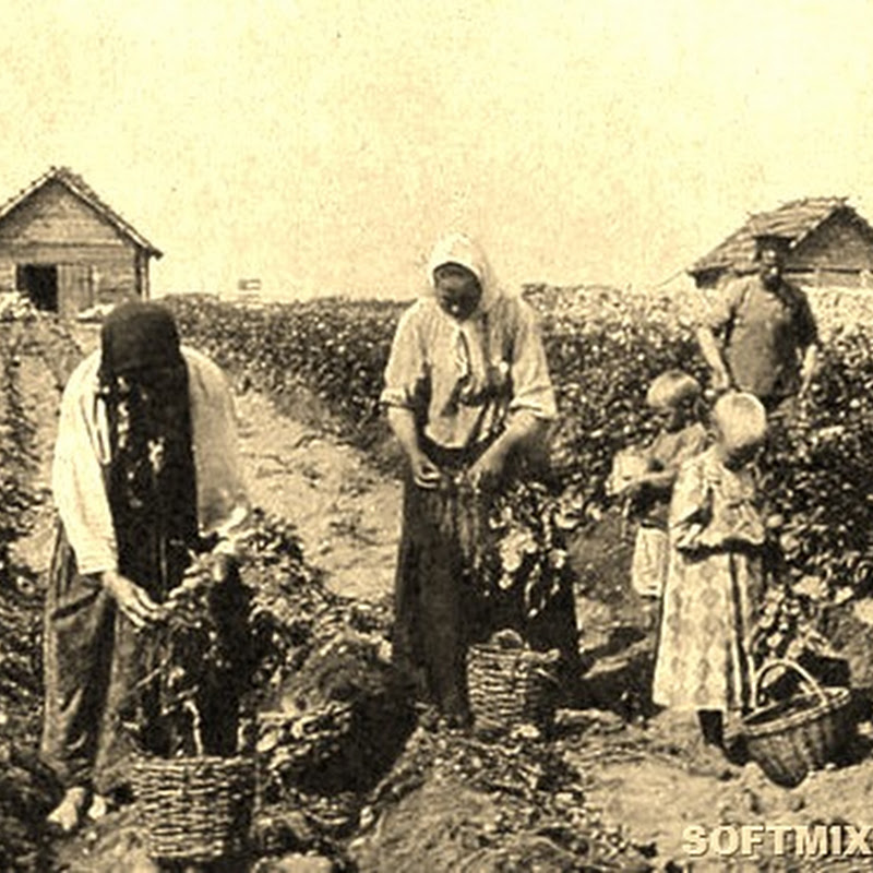 Что русские выращивали в огороде до картошки