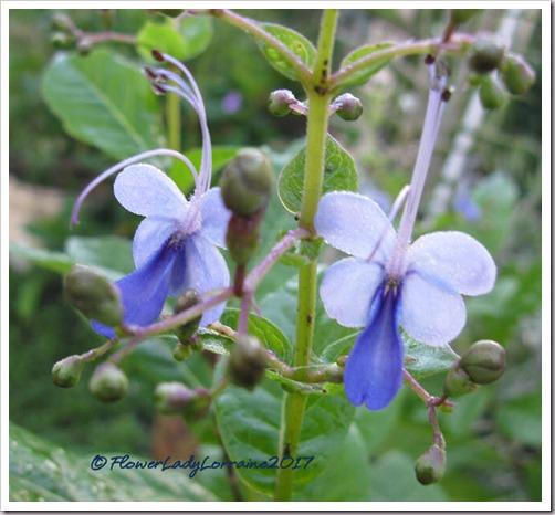 12-25-blue-butterfly