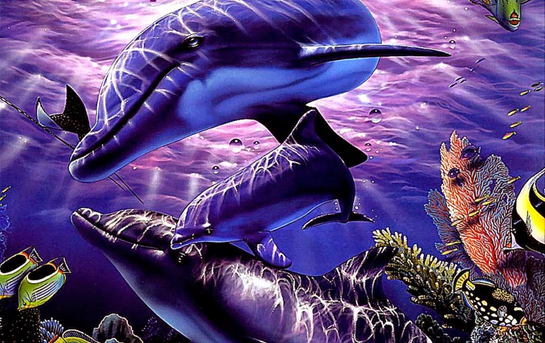 3d dolphin screensavers wallpaper best free hd wallpaper