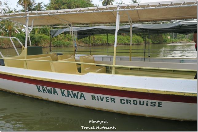 沙巴KAWA KAWA長鼻猴 (53)