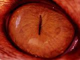 Red Cat Eye