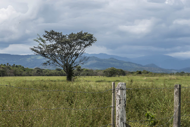 Finca La Graciela, 239 m (Tamarindo, Casanare, Colombie), 5 novembre 2015. Photo : B. Lalanne-Cassou