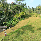 0532_Indonesien_Limberg.JPG