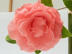 青みがかった淡いピンク 千重咲き 大輪