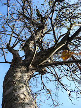 Photo: A na drzewach wciąż jabłka