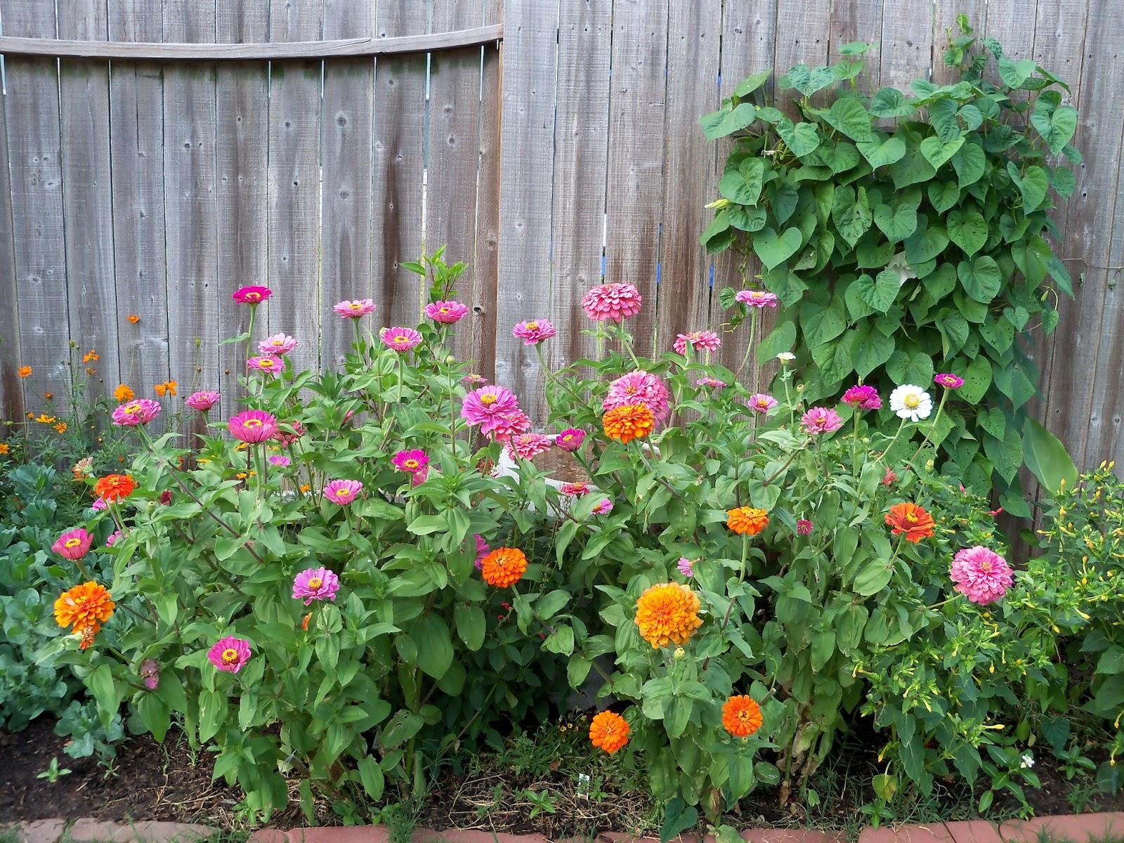 Gardening 2011 - 100_8814.JPG