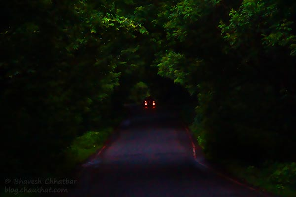Spooky Tree Tunnel