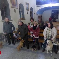 Bendición mascotas San Antón