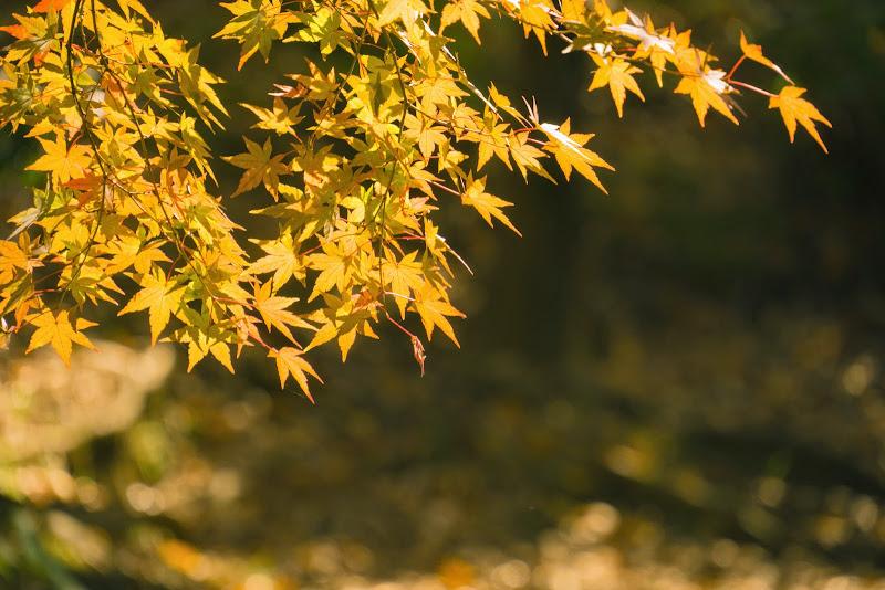 府中の森公園 紅葉 写真5