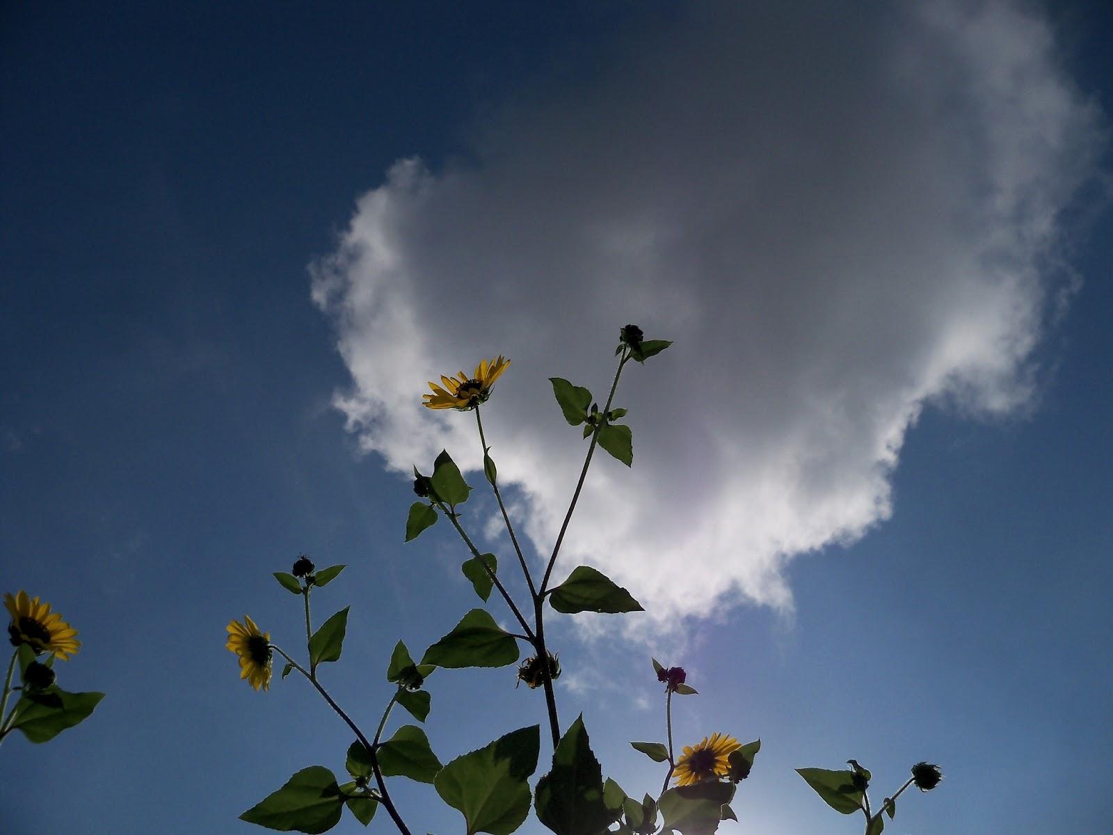 Gardening 2012 - 115_2859.JPG