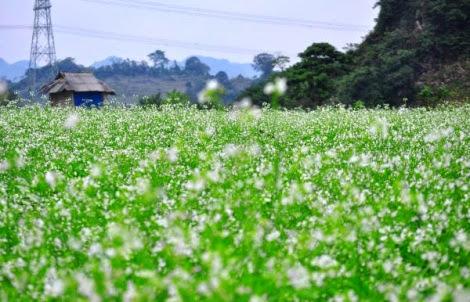 canh quan mien bac  pys travel006 Bản Dọi   Điểm du lịch homestay mới tại Mộc Châu