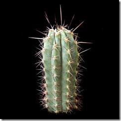 5 loài cây gây nghiện bạn có thể trồng hợp pháp trong nhà (7)