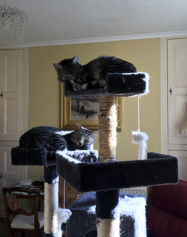 02 On the Cat Tree 14-2-19