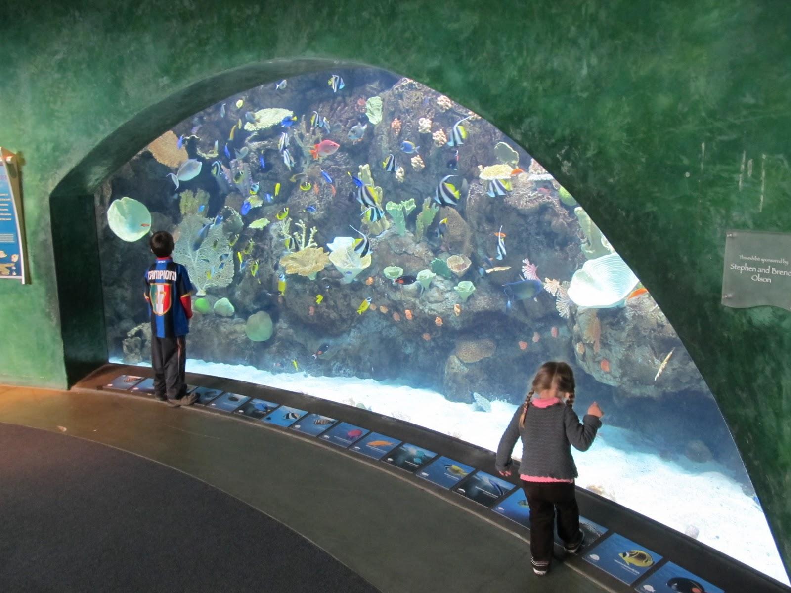 Aquarium Way Long Beach Ca