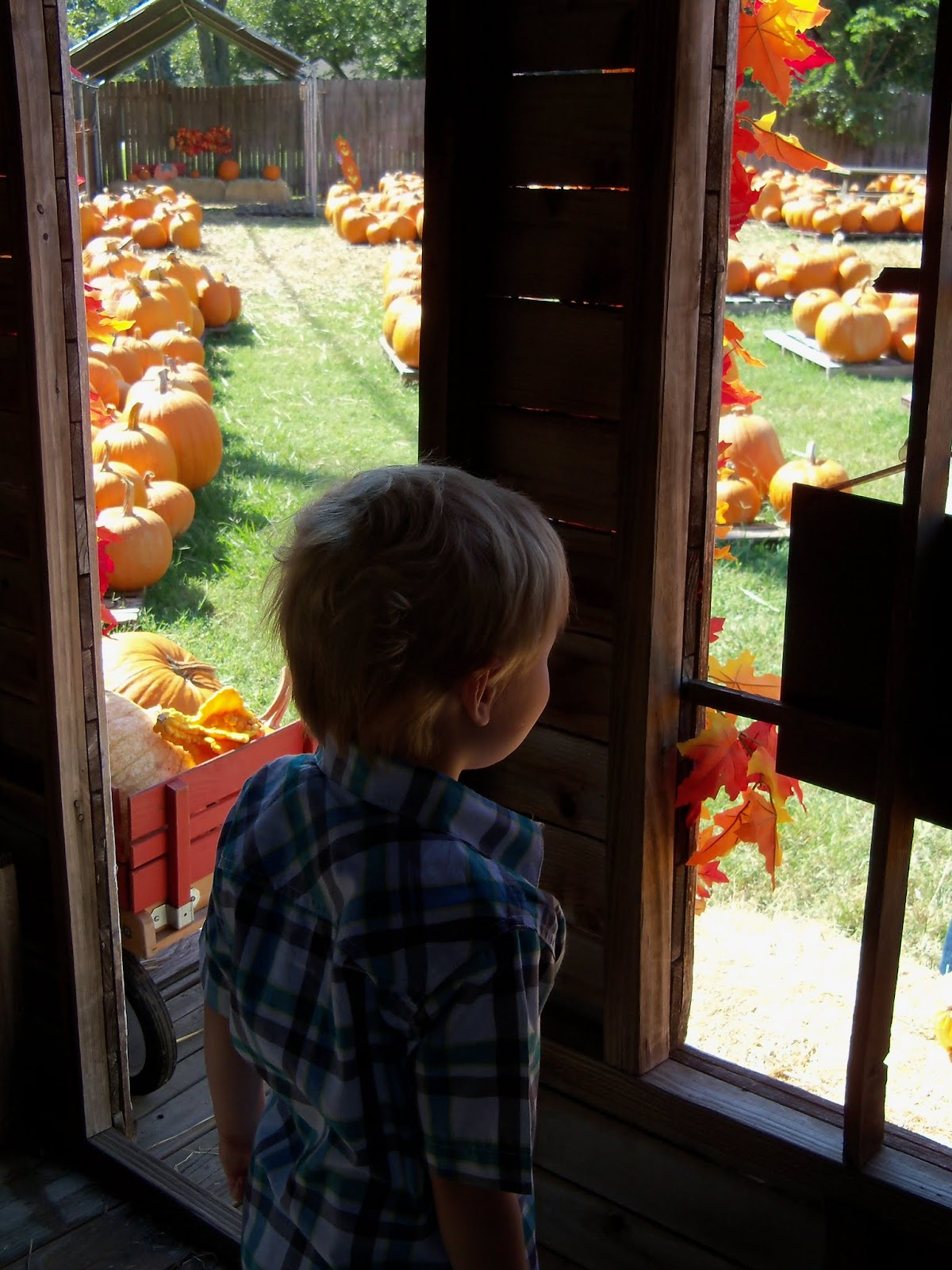 Pumpkin Patch 2015 - 100_0439.JPG