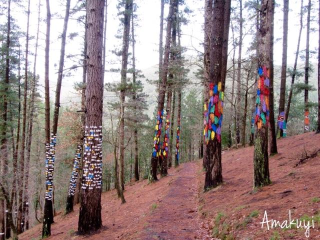 Escapadas-Euskadi-bosque-de-Oma-niños