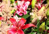 DWA2015 La Luz-020 Indra vd Ham web.jpg