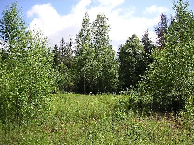 10 km au nord de Krasnorechenskij près de Dal'negorsk (800 m d'alt.), 25 juillet 2010. Biotope de P. eversmanni. Photo : J. Michel