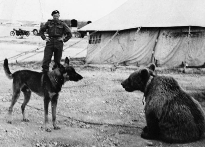 wojtek-soldier-bear-10