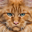 patrick kanne's profile photo