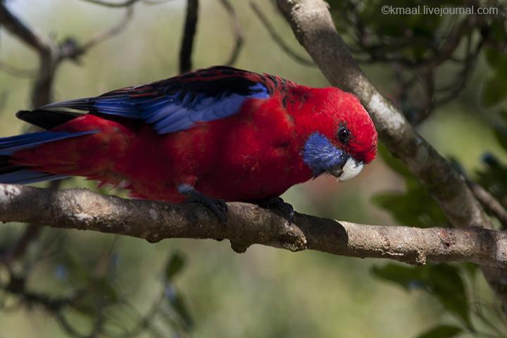 субтропики россии птицы фото