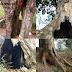 4 Pohon Perindang Jalan Palabuhanratu - Surade Terancam Tumbang Membahayakan Pengguna Jalan