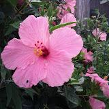 Gardening 2013 - IMG_20130526_103306.jpg