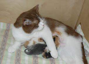 Photo: Am Tag nach dem Kaiserschnitt: Alle sind wieder munter und die Kleinen trinken bei Mama Smilla