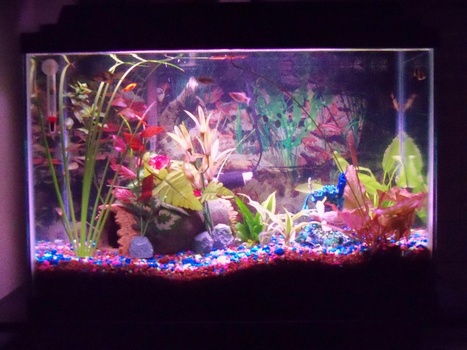 Fish - 100_6683.JPG