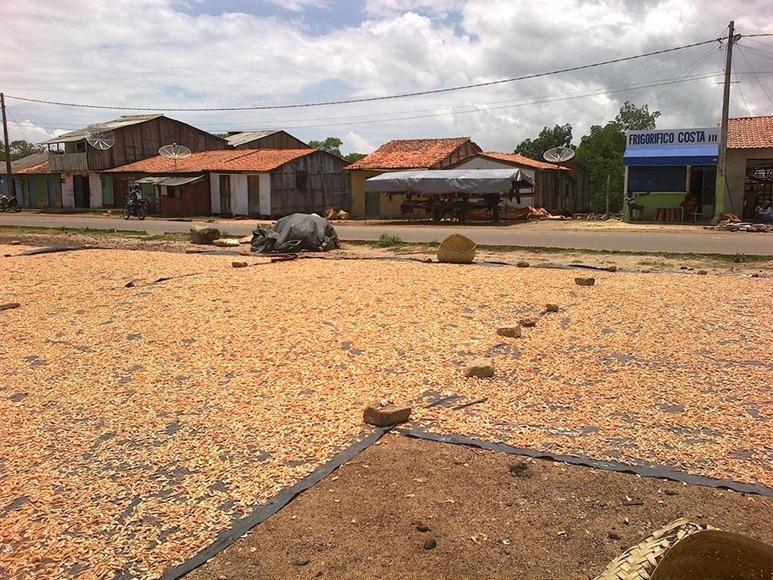 Gamberi in essiccazione - Apicum-Açu, Maranhao, fonte: pagina Facebook Apicum-Açu