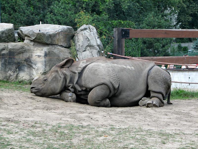 Warszawskie zoo - img_6311.jpg